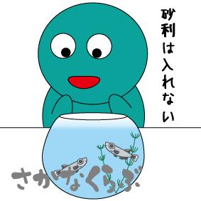 メダカの稚魚飼育はベアタンク